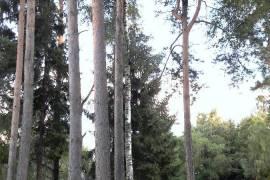 Kauno r. sav., Vilemų k., Smilgų g., mūrinis namas , Smilgų 3