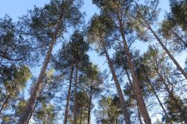 Parduodamas miškas Švenčionių rajone, Sarių kaime šalia Sarių ežero\n\nPlotas - 0,73 ha\n180 m iki S