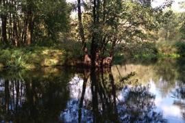 Švenčionių r. sav. Padubingės k. Silniškių vs. žemės ūkio paskirties sklypas prie Žeimenos upės